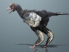 Scoperto l'Uccello più antico del mondo